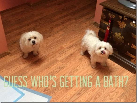 Puppies Bath