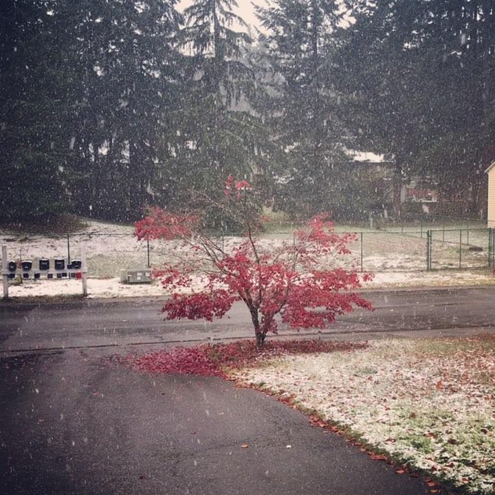 More snow shots ❄️🌨