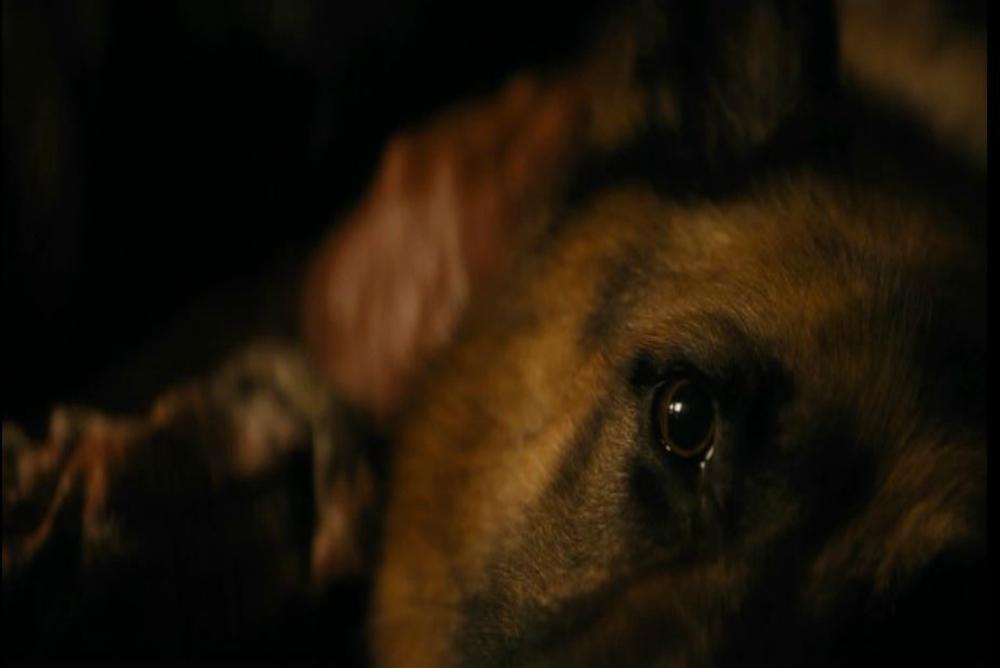 3. FTWD, ep. 3, dead dog