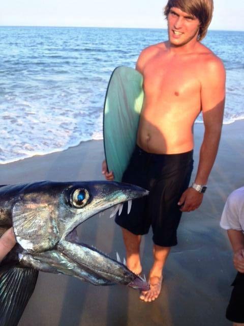 Lancetfish image 2