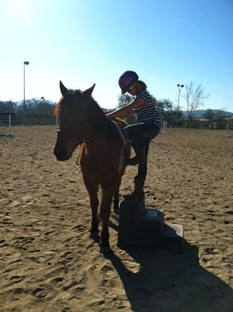 Januarys Bucket Fund Receipt An UPDATE ON BODHI And An ATTA BOY Horse And Man