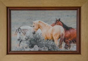 Framed Photo on Canvas of Horses
