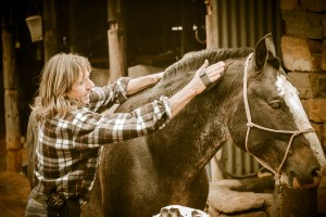 Equine Educational Programme - learning about grooming a horse