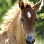 30 Best Horse Songs Horse Illustrated