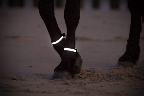 LED Beenverlichting, Paardenverlichting, Led verlichting paard
