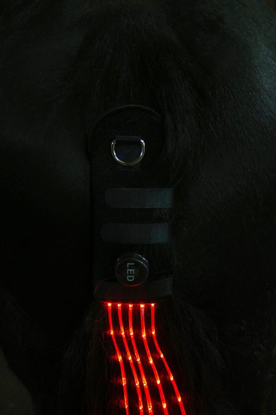 horse tail lights rood staartverlichting tail light