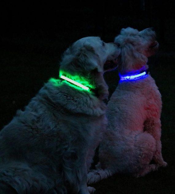 led hondenhalsband. hondenverlichting