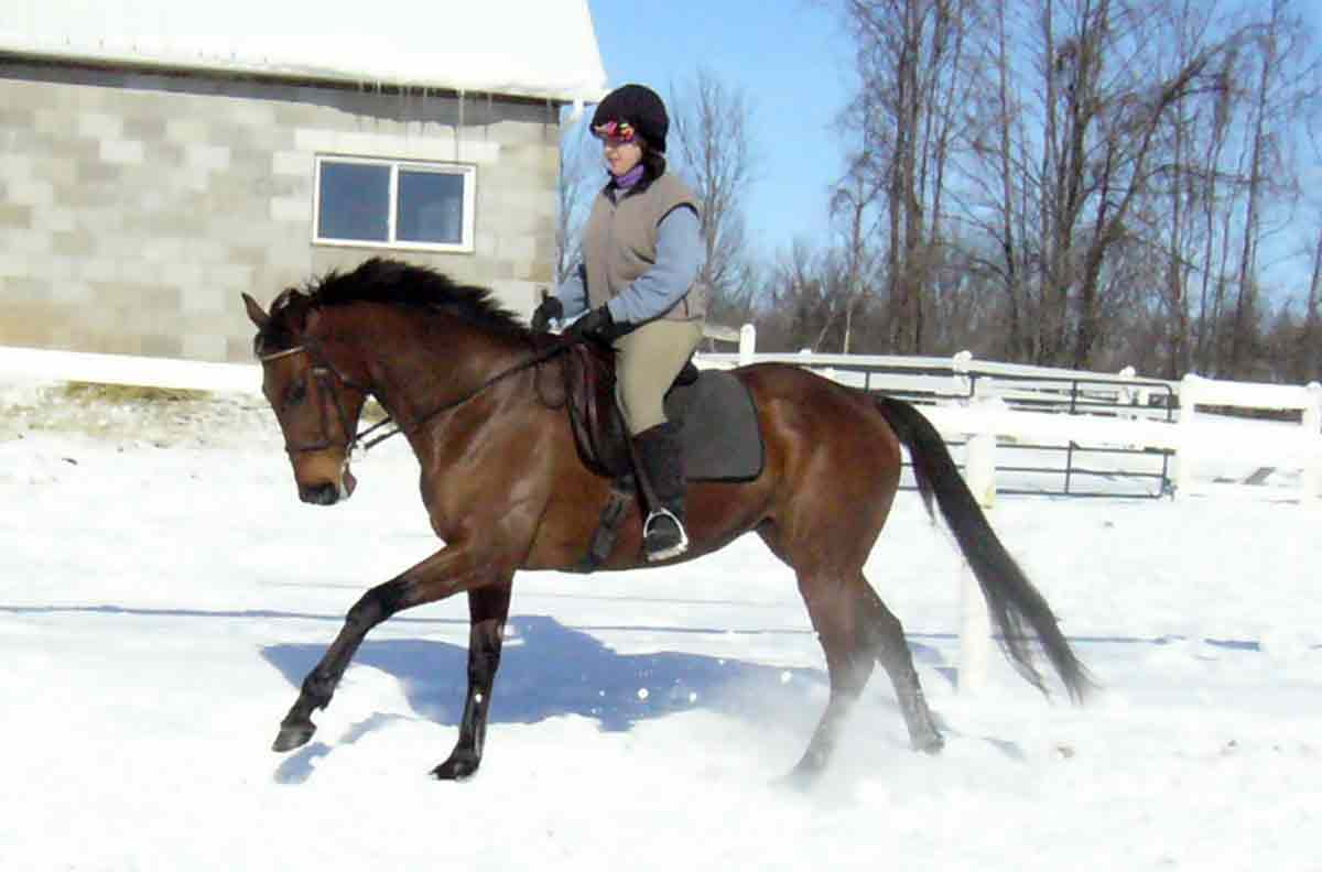 "How The ""Not Canter"" Can Drastically Improve Your Transitions"