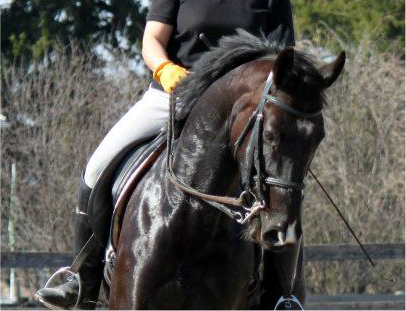 "How to ""Fill Up"" Your Outside Rein for a True Neck Rein"