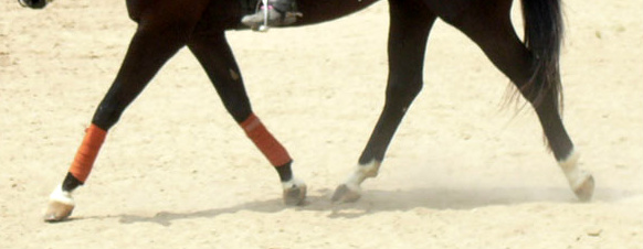 Do You Make This Timing Mistake When Riding Your Horse?