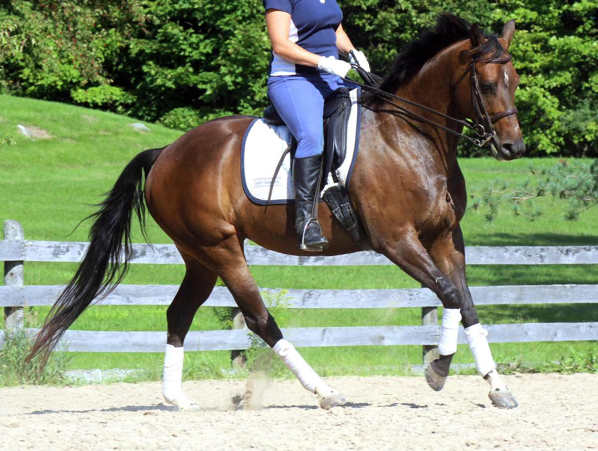 "Use the ""Canter-Trot"" to Truly Engage the Hind End"