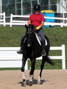 Effective Rider Horse Listening