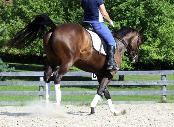 Two Steps to Facing Fear While Riding Horses