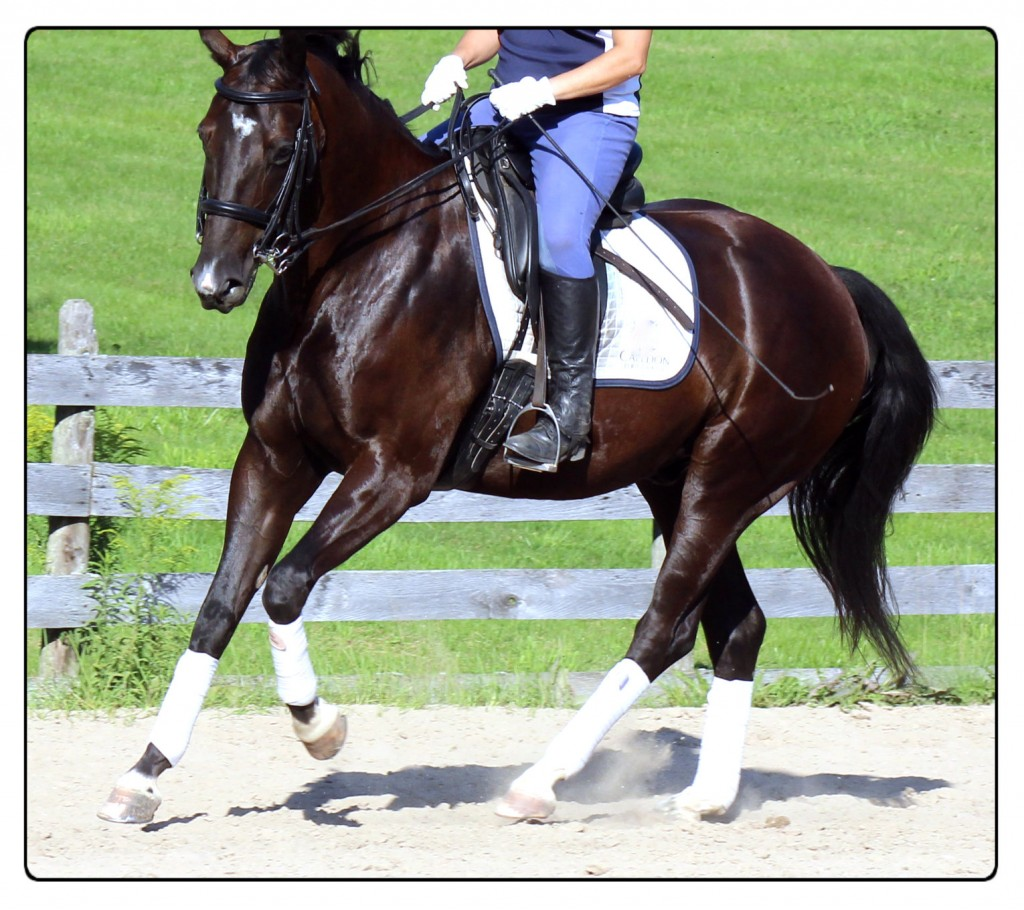Steps For Horses : Steps to help your horse through a turn listening