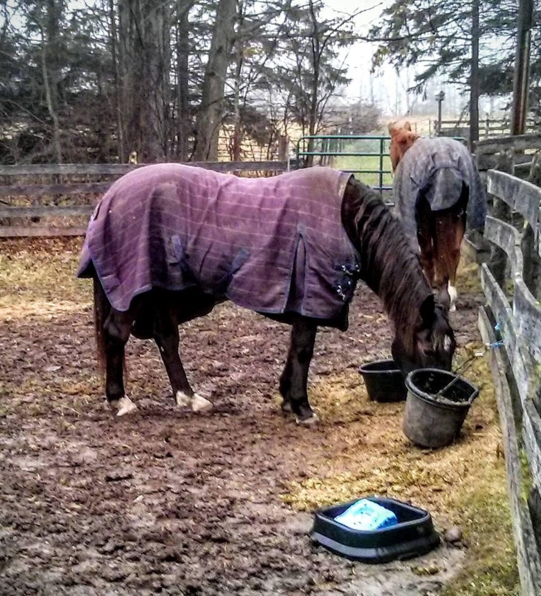 THE Blanket Rule For Blanketing Horses