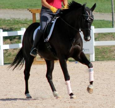wrong canter lead
