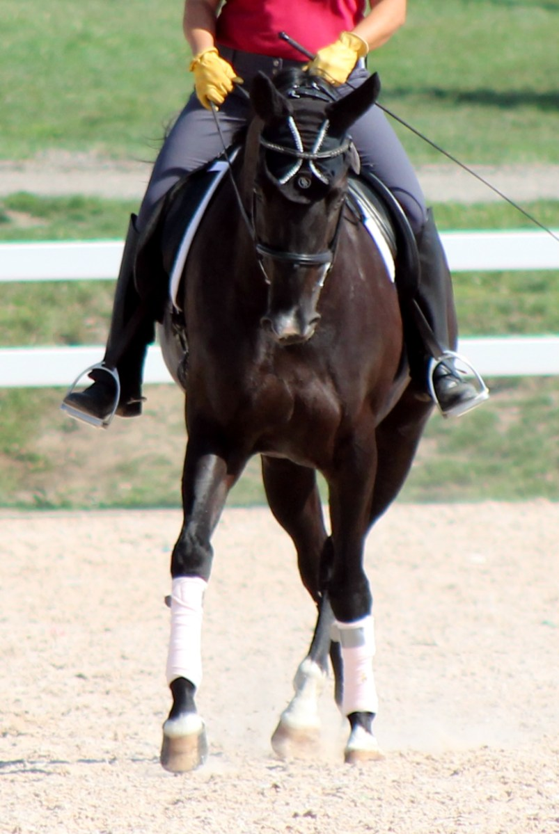 Leg Yield/Shoulder-Fore - A Great Way To Your Horse's Back