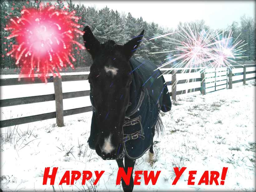 happy new year horse listening