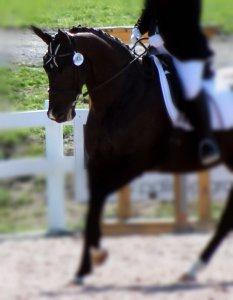 Rider's Aids Horse Listening