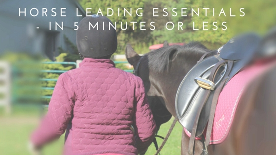 Horse Leading Essentials - In 5 Minutes Or Less