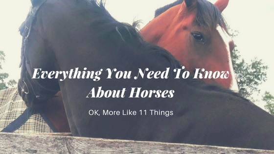 Everything You Need To Know About Horses (OK, More Like 11 Things)