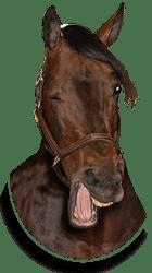 Winking Horse, Dr. Tucker