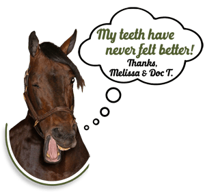 Winking Horse w Quotes, Dr. Tucker