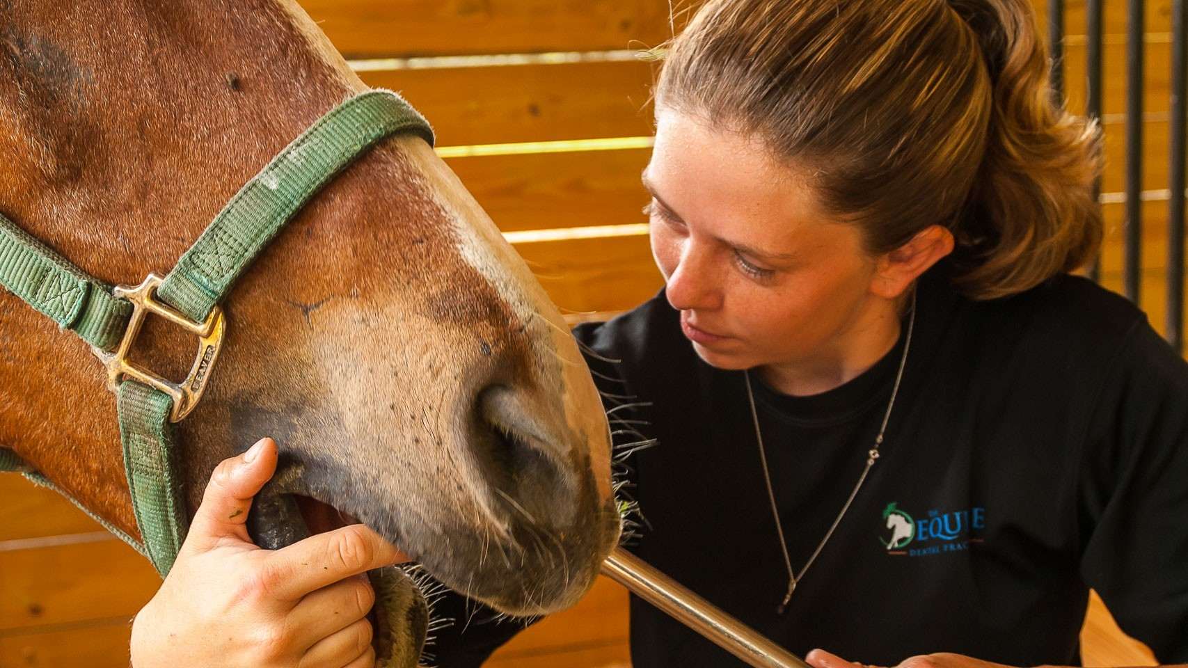 why horsemanship dentistry