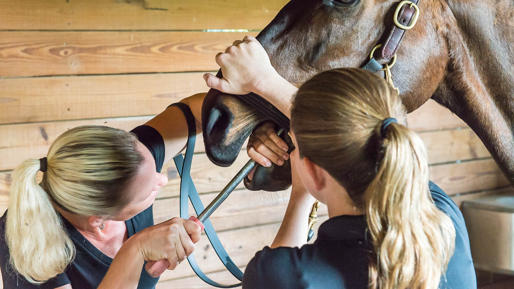 Students at The Horsemanship Dentistry School