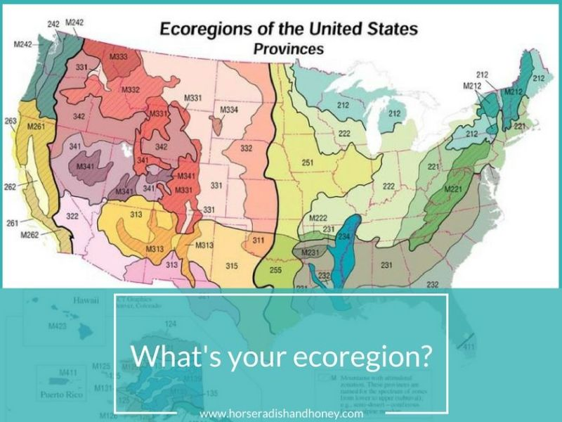 US Ecoregions | Horseradish & Honey