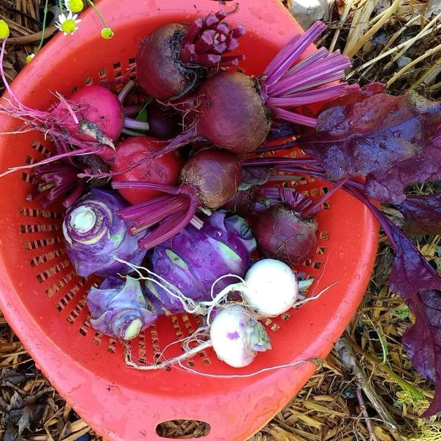 Todays harvest Root vegetables for the win! Read more onhellip