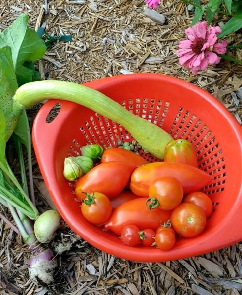 October 1 Harvest   Horseradish & Honey