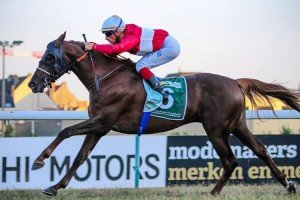No Problem Al Maury wins the August 2013 Sheikh Zayed Cup