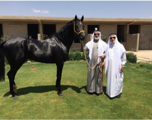 Al Dhawi on Al Nujaifi stud farm in Mosul in 2013 with Dr. Al Nujaifi and his father