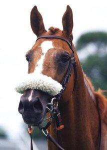 Al Sakbe at Newbury 2001 photo Bill selwyn