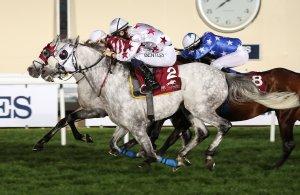 MAJEED Winner of Q L PA Arabian Trophy