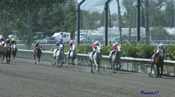 Paddys Day wins at Pleasanton racing 2017