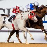 AS Ajeeb (chestnut) wins at Meydan - file photo