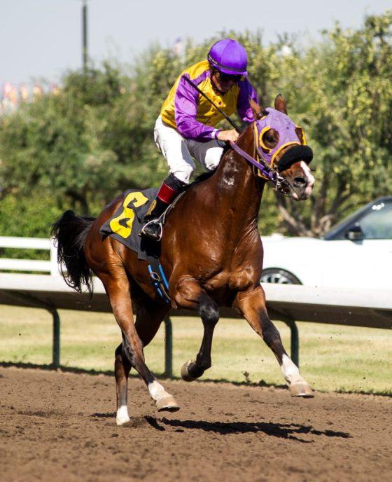 2019 Wathba Stallion Bonanza Series