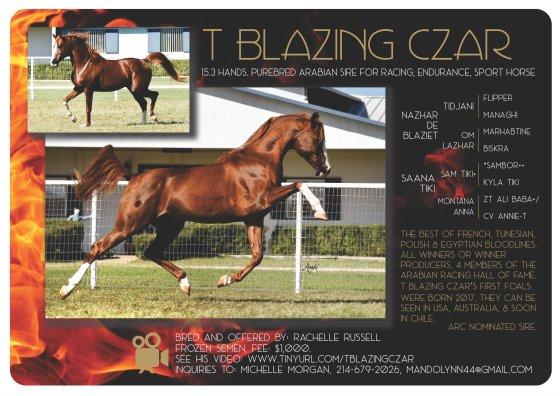 T Blazing Czar