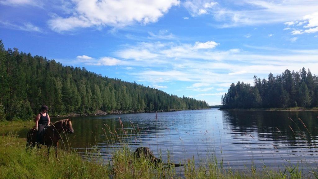 Silviculture in the united states: Horses Of Taiga Vildmarksturridning Med Islandshast I Norrland