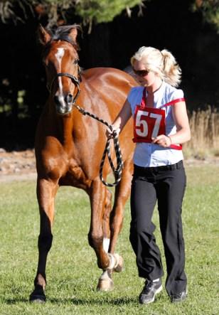 NZ-endurance-champs8634