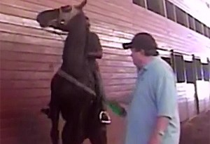 A horse being shocked in the head with a bull prodder.