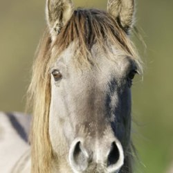 Rare horse breed proves crucial to delicate ecosystem