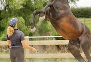 Tina Fagan with her stallion Damontes LS.