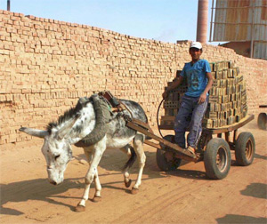 Working horses, donkeys and mules are often suffering from exhaustion, dehydration, malnutrition, and abuse as a result of excessive workloads and limited animal health services in developing countries.