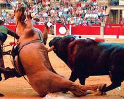 Horses – the forgotten victims of bullfighting