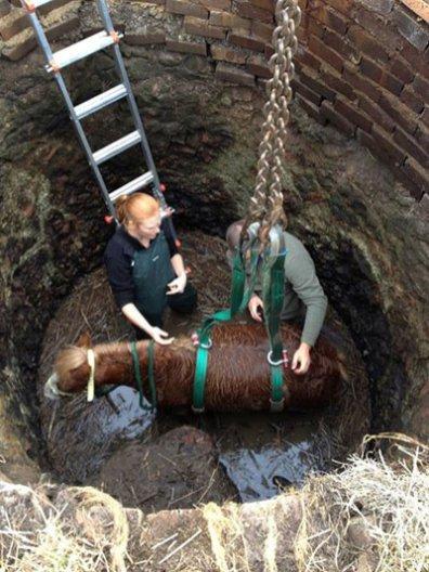 Veterinary surgeon Kate Burnheim prepares Fuzz for rescue.