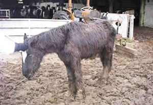 One of the ponies found at the site.