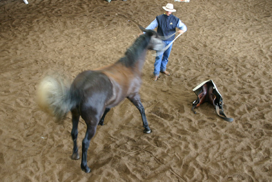 Boring routines, picky bosses, limited rewards. Little wonder horses sometimes buckle under stress.